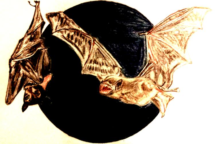 bats_af_1